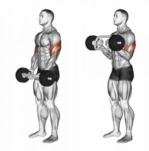 tricep bar hammer curl muscle works
