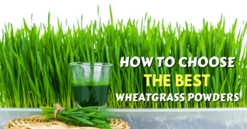 the best wheatgrass powders