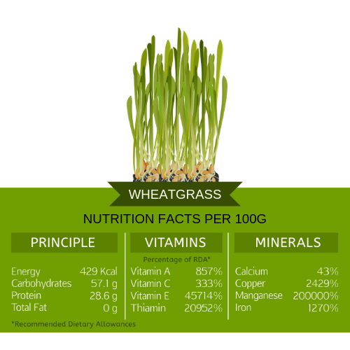 wheatgrass nutritional info 100g