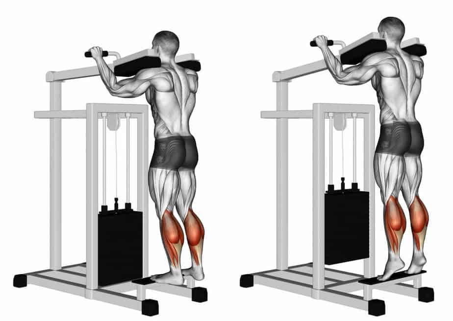 standing calf raise muscles worked